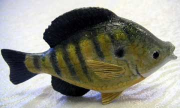 Bluegill (block)